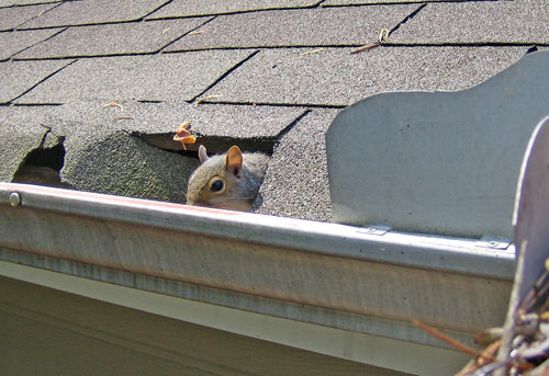 The 8 Funniest Gutter Related Photos Gutter Helmet